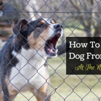 how to stop your dog from barking at the neighbor