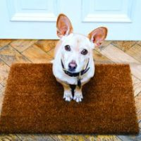 Houseguest Etiquette for Dogs