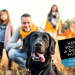 How to Socialize a Dog with Humans: Even the Timid Pooch Can Do It! - TheDogTrainingSecret.com