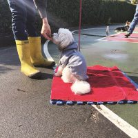 Tips on Living With and Training a Blind Dog