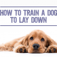 How to Train a Dog to Lay Down - TheDogTrainingSecret.com