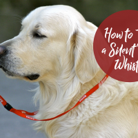 How to Use a Silent Dog Whistle - TheDogTrainingSecret.com