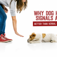 Why Dog Hand Signals are Better Than Verbal Commands - TheDogTrainingSecret.com