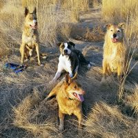 Happy Thanksgiving - Whole Dog Journal