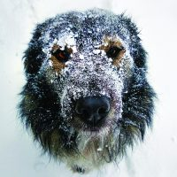 Winter Warnings for your Dog