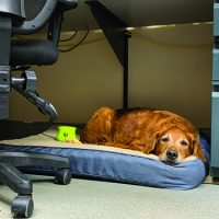 Dogs in the Workplace - Whole Dog Journal