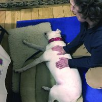 Canine Massage Therapy - Whole Dog Journal