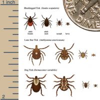 It's Tick Season! - Whole Dog Journal