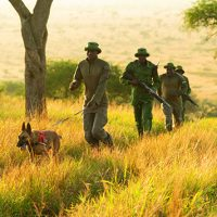 Wildlife Protection Dogs - Whole Dog Journal