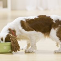 Which Type of Dog Food is Best?