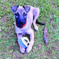 Life Lessons Learned From Training Dogs