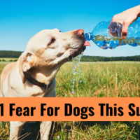 My #1 Fear For Dogs This Summer - TheDogTrainingSecret.com