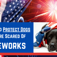 8 Ways To Protect Dogs Who Are Scared Of Fireworks - TheDogTrainingSecret.com