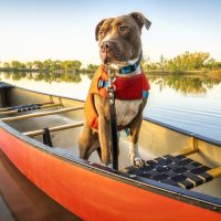 How To Get Your Dog To Wear A Life Jacket