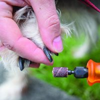 Grinders vs. Clippers: What's Best for your Dog's Nails?