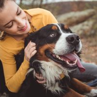 Heartworm Prevention for Dogs with Food Allergies
