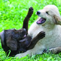 Infection vs. Isolation Risks with Your Dog