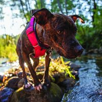 Matters of the Heartworm - Whole Dog Journal