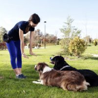 Please, Get Professional Help - Whole Dog Journal