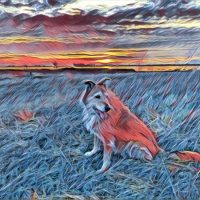 Prisma - A Fun App for Dog Owners