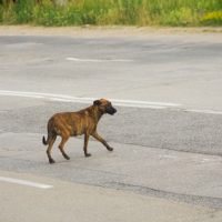 Stray Dogs Living On The Streets