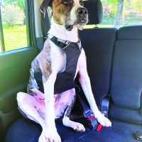 Dog Car Harnesses Review - Whole Dog Journal
