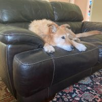 Sisyphean Housecleaning With Dogs - Whole Dog Journal