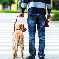 Intelligent Disobedience - Whole Dog Journal