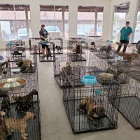 The Importance of Crate Training Your Dogs
